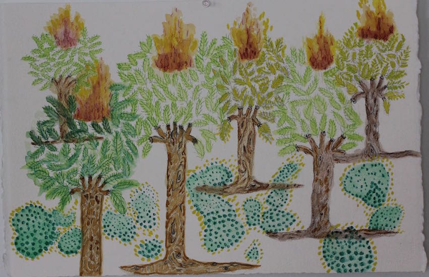 Draw Forest Fire 16